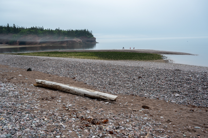 Fundy Trail NB July 2019_050